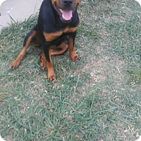 Adopt A Pet :: Mika - Fort Worth, TX