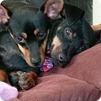 Adopt A Pet :: Autumn And Poppy - Hazelwood, MO
