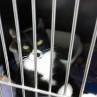 Adopt A Pet :: Ollie - Alpena, MI