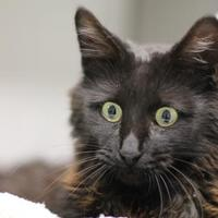 Adopt A Pet :: Theodore - Pratt, KS