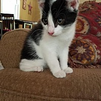 Adopt A Pet :: Maynard - Berkeley Springs, WV