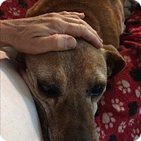 Adopt A Pet :: Morris - Bakersville, NC