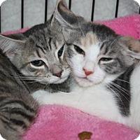 Adopt A Pet :: Jenn and Jaclyn - Foster Me? - Jenkintown, PA