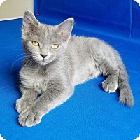 Adopt A Pet :: Lexus - Las Vegas, NV