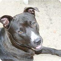 Adopt A Pet :: *Rocket - Winder, GA