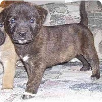 Adopt A Pet :: Snick - Evansville, IN