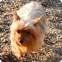 Adopt A Pet :: Whitley - Prole, IA