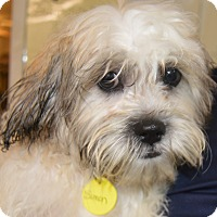 Adopt A Pet :: Simon - Prole, IA