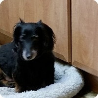 Adopt A Pet :: Buddy - Pinellas Park, FL