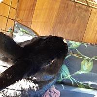 Adopt A Pet :: Cash - Maple Shade, NJ