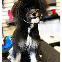 Adopt A Pet :: Albus - Los Alamitos, CA
