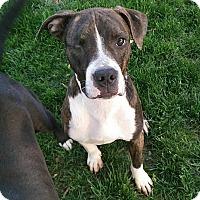 Adopt A Pet :: Reuben - Dayton, OH
