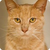 Adopt A Pet :: Meow Mix - Grayslake, IL