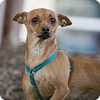 Adopt A Pet :: Ms. MoneyPenny (Penny) - Garner, NC