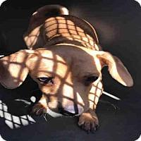 Adopt A Pet :: A093496 - Hanford, CA