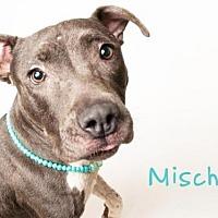 Adopt A Pet :: *MISCHA - Sacramento, CA