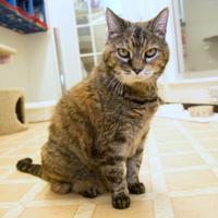 Adopt A Pet :: Zira - Berea, OH