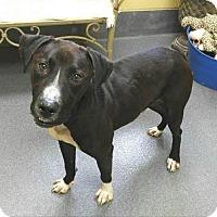 Adopt A Pet :: Nugget - Elmwood Park, NJ