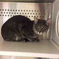 Adopt A Pet :: A030946 - Norman, OK