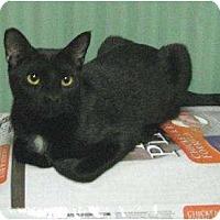 Adopt A Pet :: Gordy - Metairie, LA