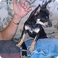 Adopt A Pet :: Pita - Fresno, CA