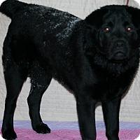 Adopt A Pet :: Oliver - Holland, MI