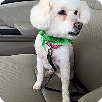 Adopt A Pet :: Daisy - Garwood, NJ