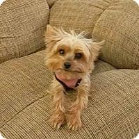 Adopt A Pet :: CODY - Higley, AZ