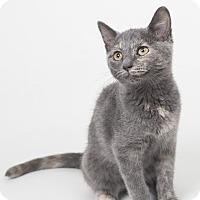 Adopt A Pet :: Pearl - Lombard, IL