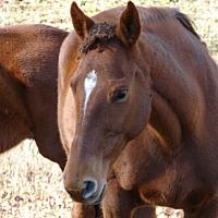 Adopt A Pet :: Seed of Gold - cumming, GA