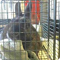 Adopt A Pet :: *KERMIT - Sacramento, CA