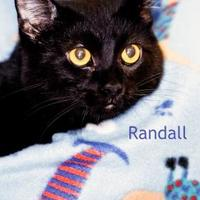 Adopt A Pet :: Randall - Cedar Rapids, IA