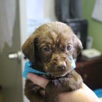 Adopt A Pet :: 36450597 - Cleveland, AL