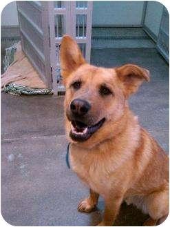 German Shepherd Dog Mix Dog for adoption in Alliance, Nebraska - Max