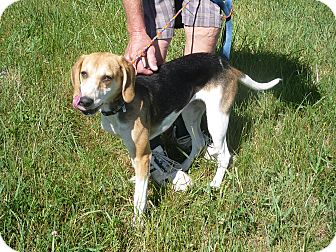 Beagle Mix Dog for adoption in Zanesville, Ohio - #216-13  @ Animal Shelter
