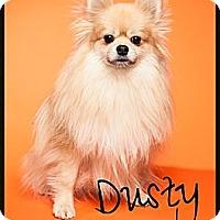 Adopt A Pet :: Dusty - Escondido, CA