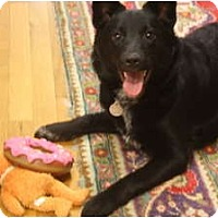 Adopt A Pet :: Layla - Hagerstown, MD