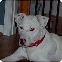 Adopt A Pet :: Gabe - Middletown, PA