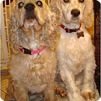 Adopt A Pet :: Mary Kate and Ashley - Sugarland, TX