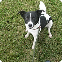 Adopt A Pet :: #251-14 @ Animal Shelter - Zanesville, OH
