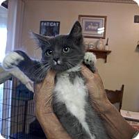 Adopt A Pet :: Dalilah - Modesto, CA
