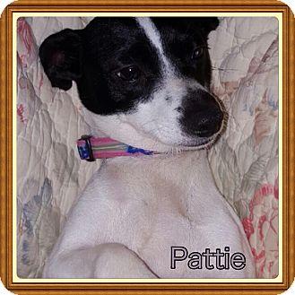 Rat Terrier Mix Dog for adoption in Haggerstown, Maryland - Pattie