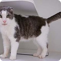 Adopt A Pet :: Tall Chief - Merrifield, VA