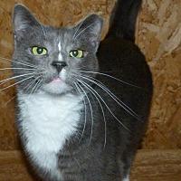 Adopt A Pet :: Dino - Stafford, VA