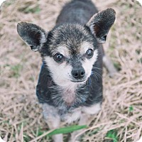 Adopt A Pet :: Stewart - Dickinson, TX