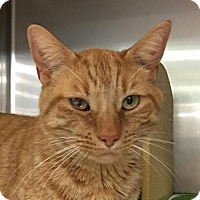 Adopt A Pet :: Barker - Acme, MI