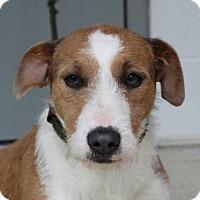 Adopt A Pet :: Roxy (TIA) - Harrisonburg, VA