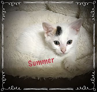 Calico Kitten for adoption in Cleveland, Tennessee - Summer
