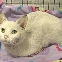 Adopt A Pet :: ONYX - Hampton Bays, NY