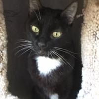 Adopt A Pet :: Lilith - Brooksville, FL